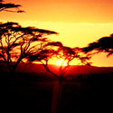 por do sol, africa, savana, deserto